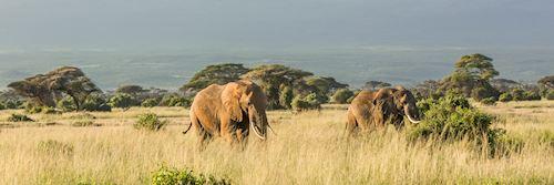 Elephants near Mt Kilimanjaro