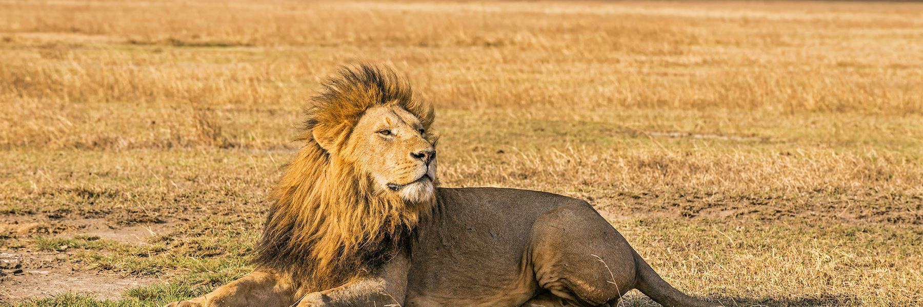 Visit Ngorongoro Crater, Tanzania