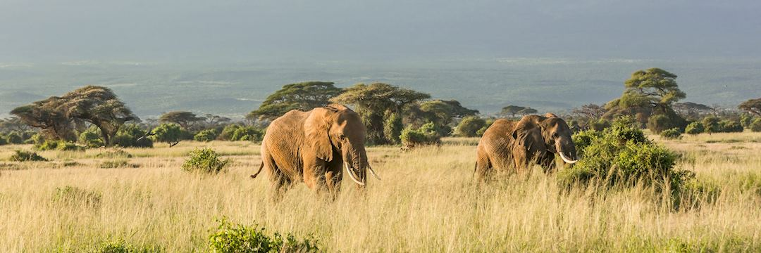 Elephants near Mt Kilimanjaro