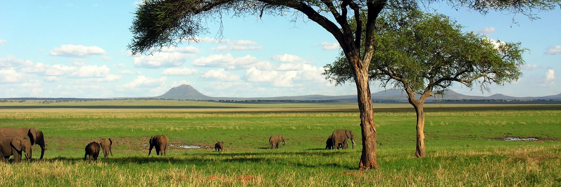 Visit Tarangire National Park, Tanzania