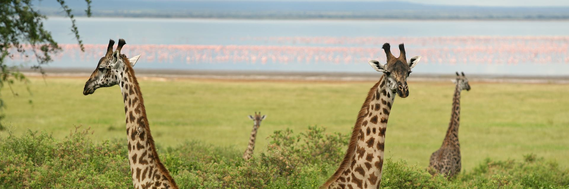 Giraffe in Lake Manyara National Park