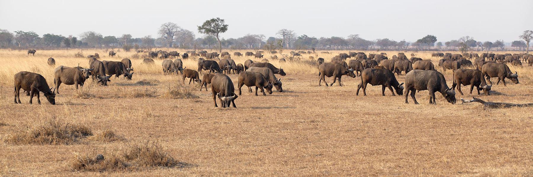 Visit Mikumi National Park, Tanzania