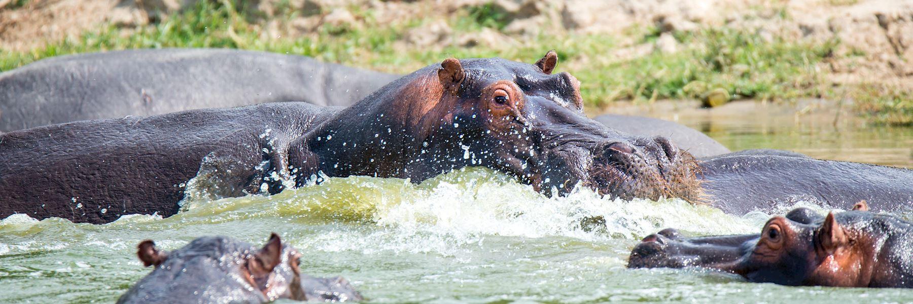 Visit Queen Elizabeth National Park, Uganda