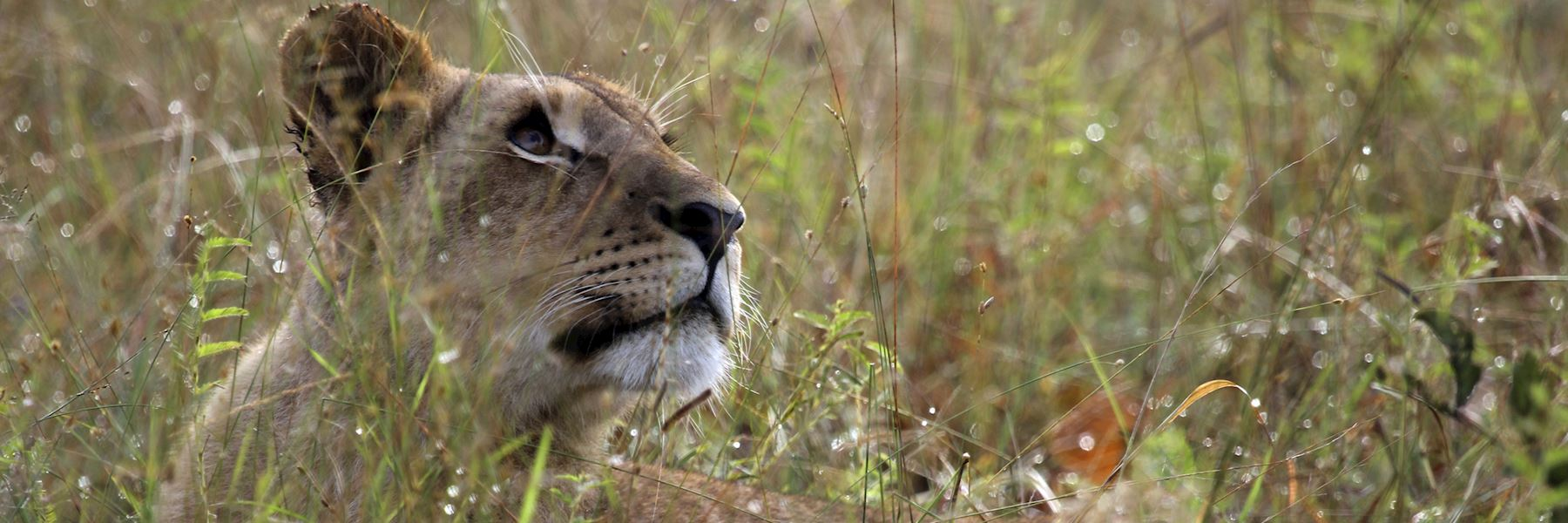 Experts in tailor-made African Safaris