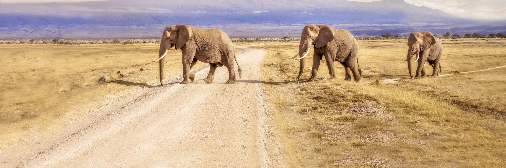 Elephant herd crossing a road