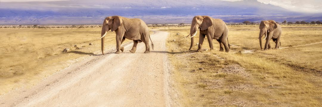 Elephant herd crossing a road