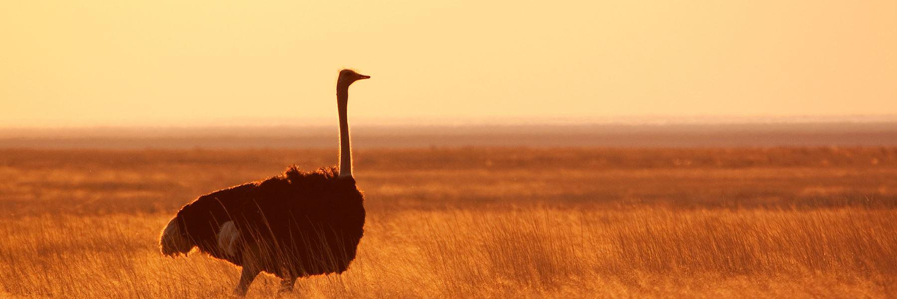 Zambia safaris and vacations