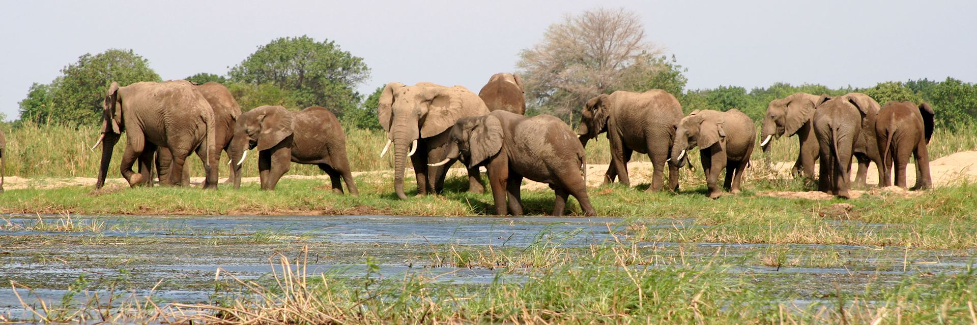 Elephants in Lower Zambezi National Park