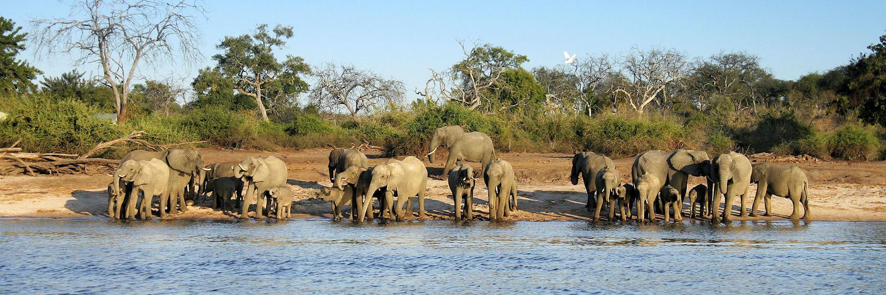 Visit Mana Pools National Park, Zimbabwe