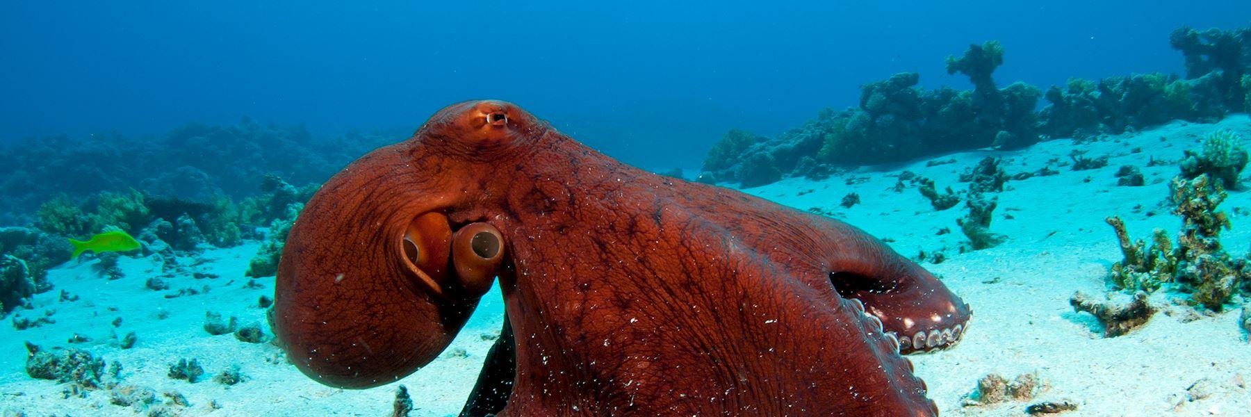 Visit Ningaloo Marine Park, Australia