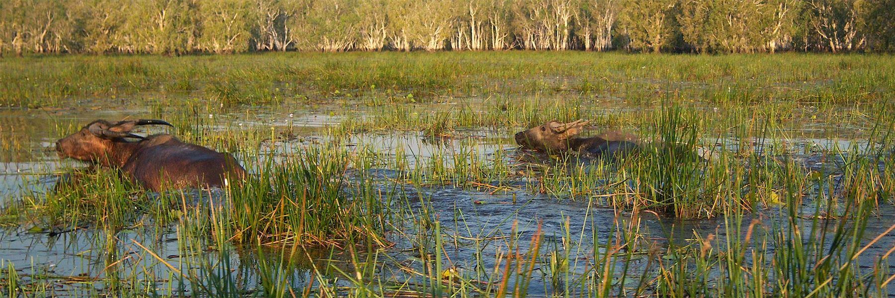 Visit Bamurru Plains, Australia