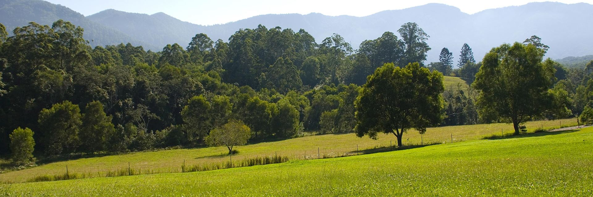 Fields surrounding Bellingen