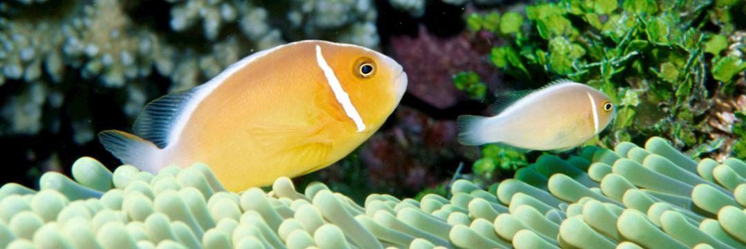 Underwater life in Fiji
