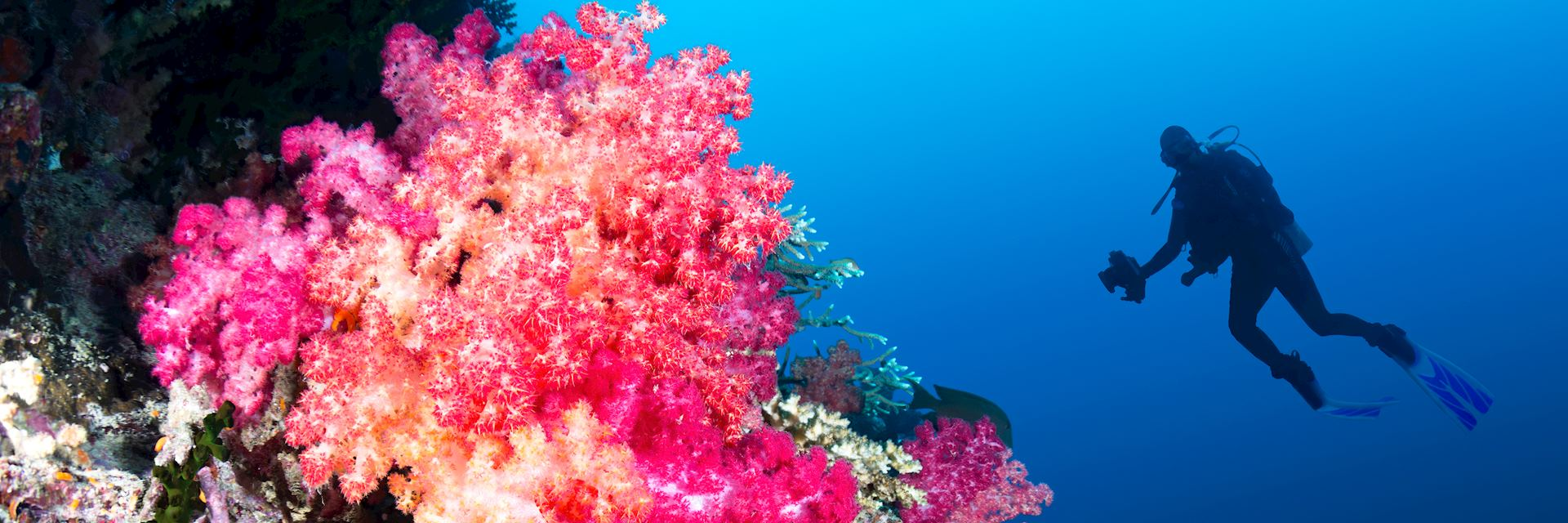 One of Fiji's many coral reefs