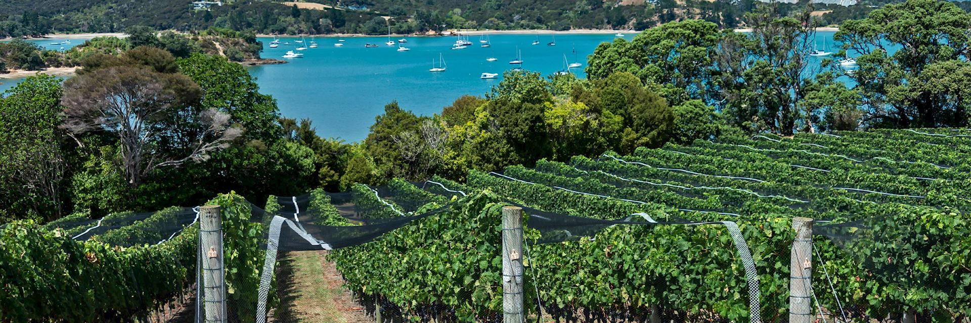 Visit one of Waihekes Island's vineyards