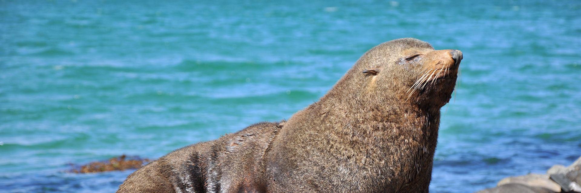 Seal in the Otago Peninsula