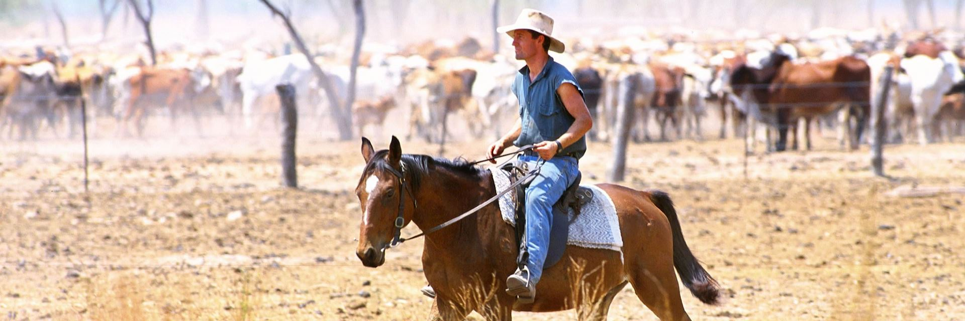 A drover working on an Outback cattle station, Australia