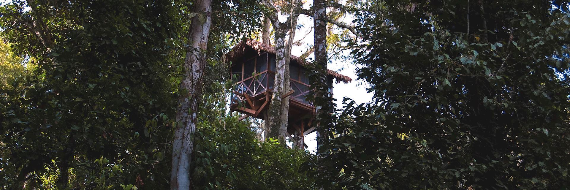 Canopy Tree house, Reserva Amazonica