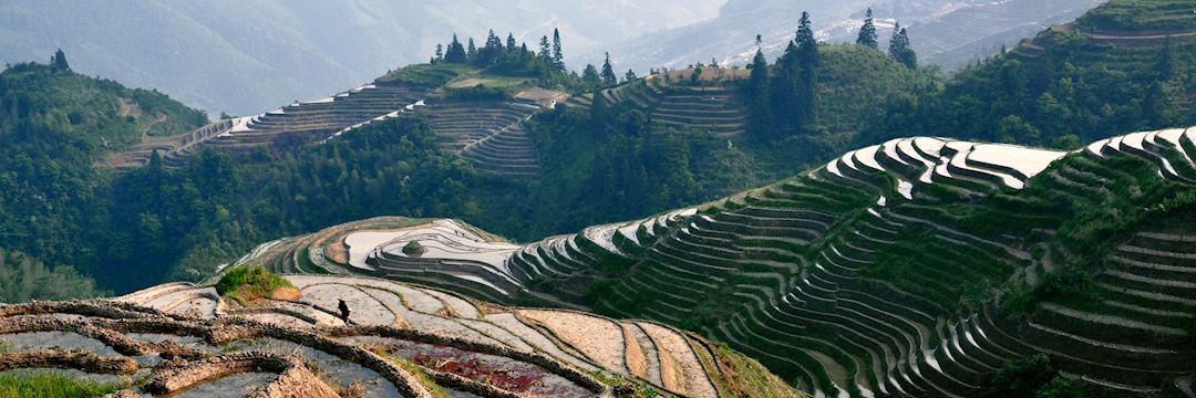 Rice_terraces_China