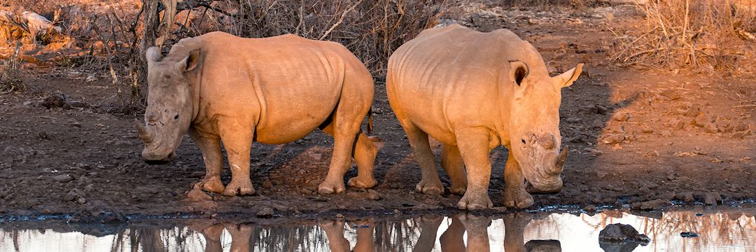 White rhinos, Madikwe Private Game Reserve, South Africa, by Chris Thompson