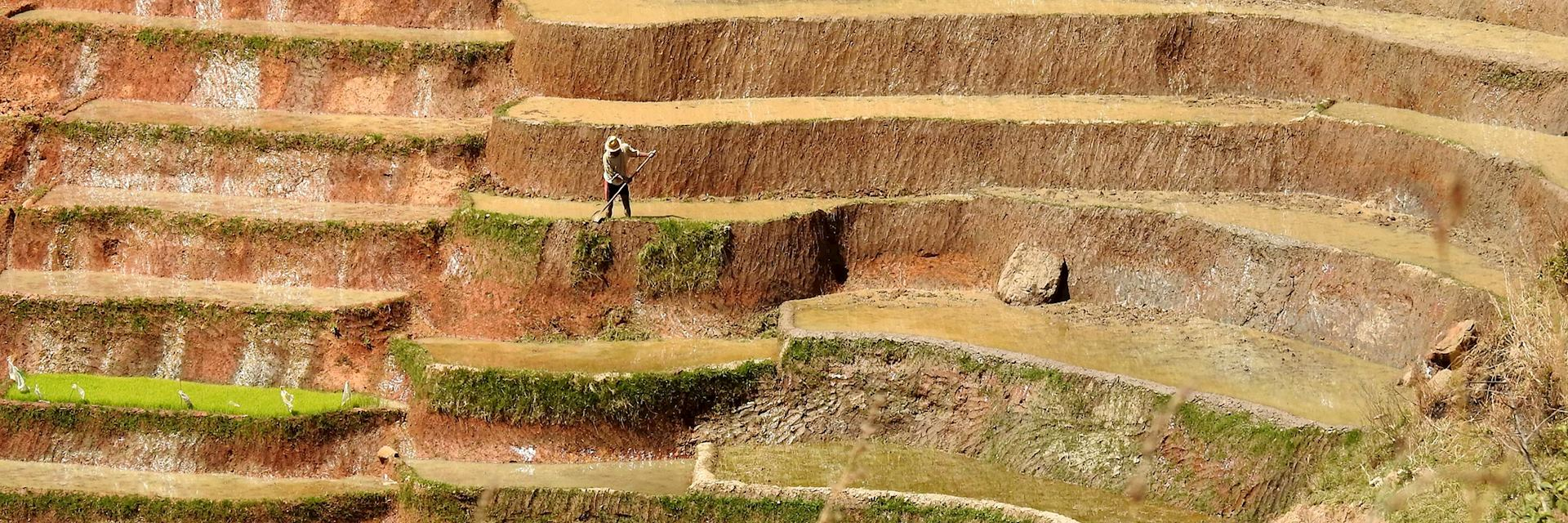 Rice farmer, Ranomafana National Park, Madagascar