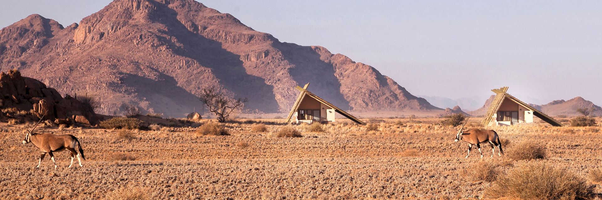 Oryx, Desert Quiver Camp, Namibia