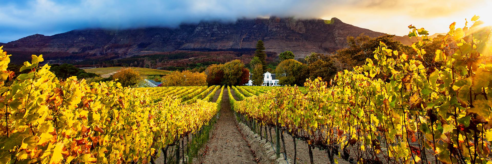 Autumn vineyards, Cape Town, South Africa