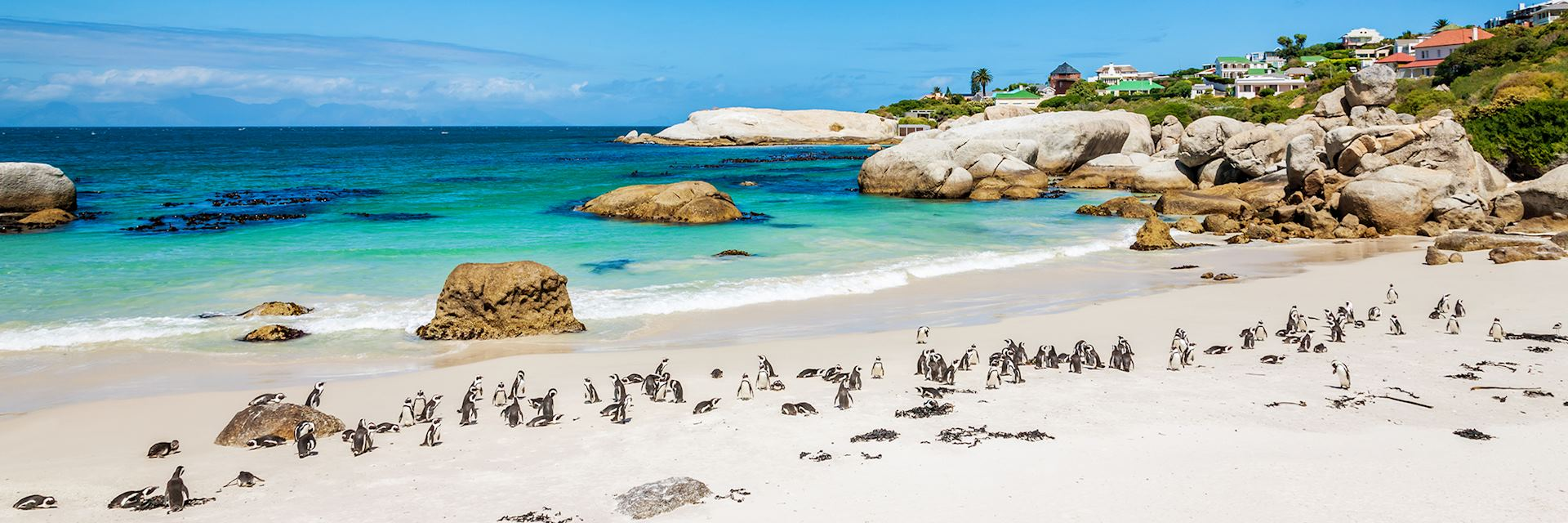 Penguins at Boulders Beach, Cape Town, South Africa