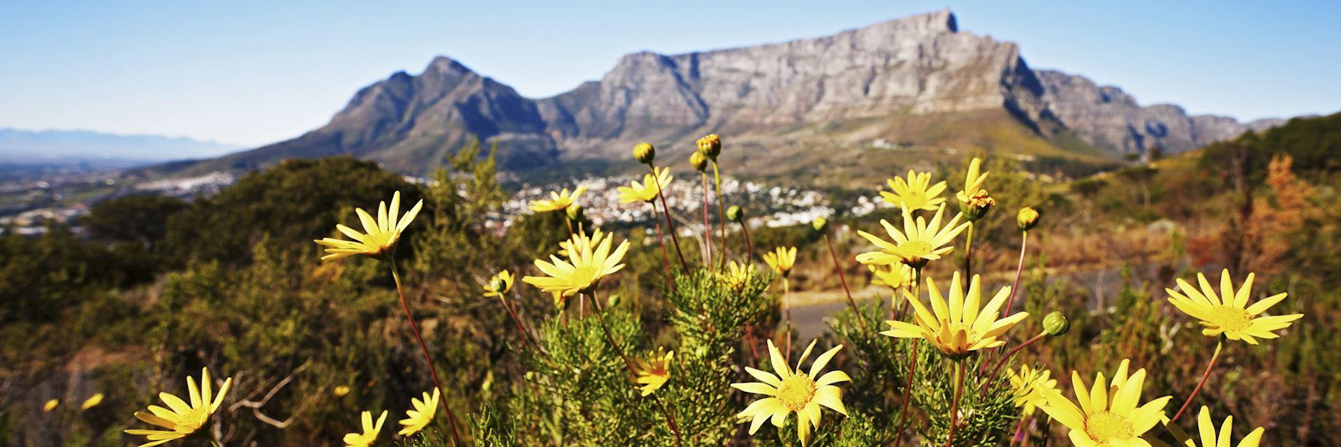 Vegetation, Cape Region, South Africa