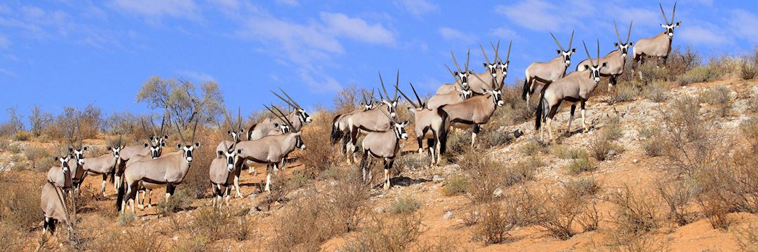 Oryx, Kgalagadi Transfrontier Park, South Africa