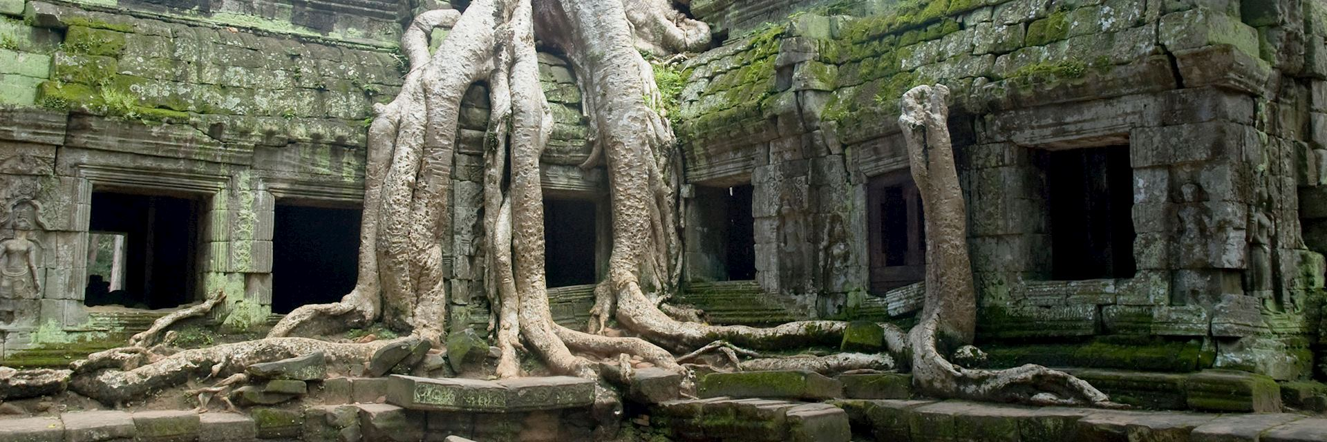 Banyan tree roots at Ta Prohm Temple, Angkor Wat, Cambodia