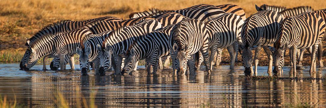 Zebra, Boswana