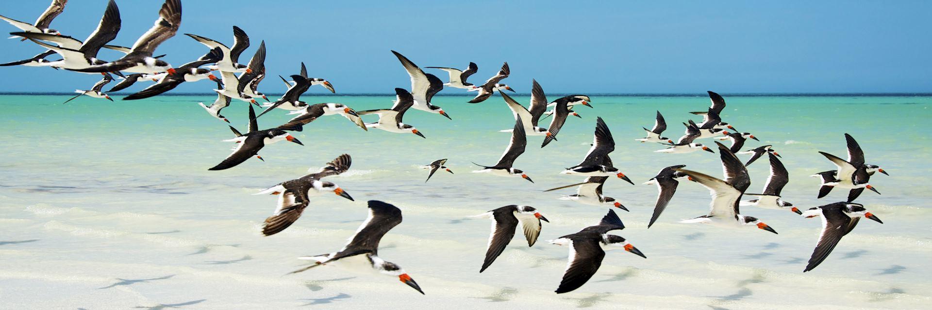 Wildlife on Holbox Island, Mexico