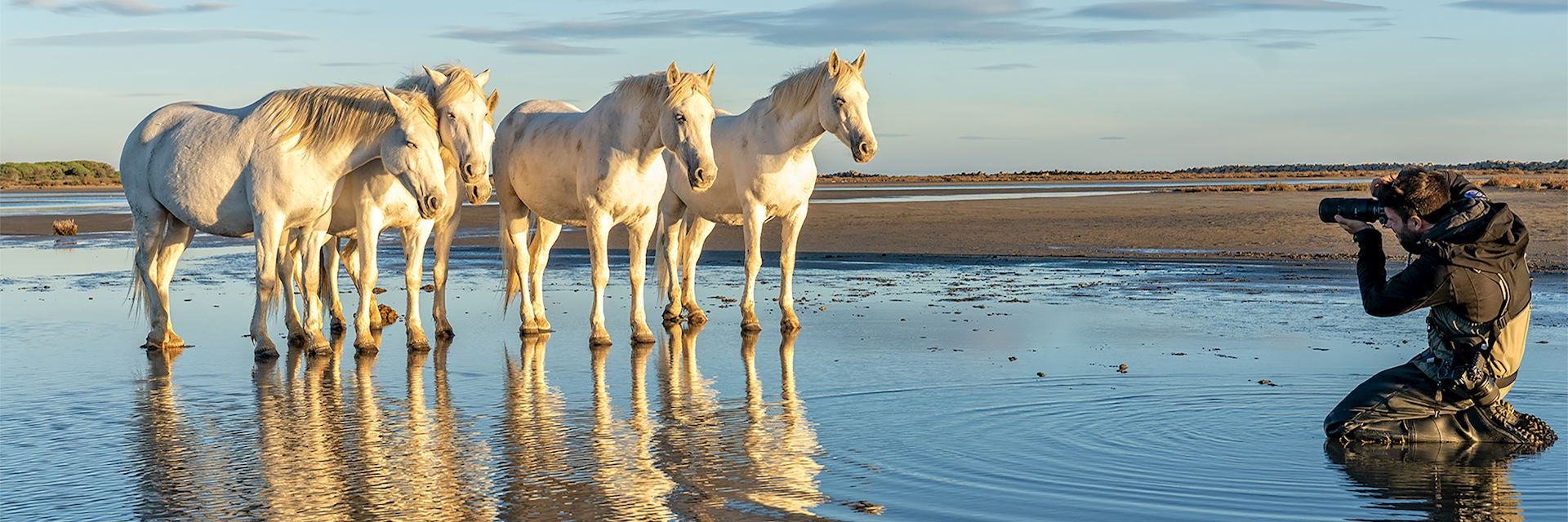 Horses in the Camargue, France - © Harry Skeggs