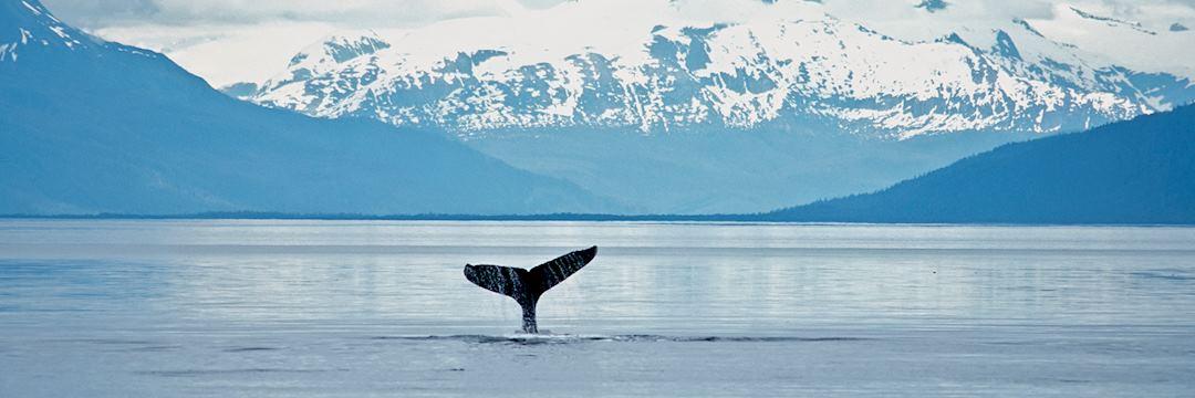 Whale, Alaska
