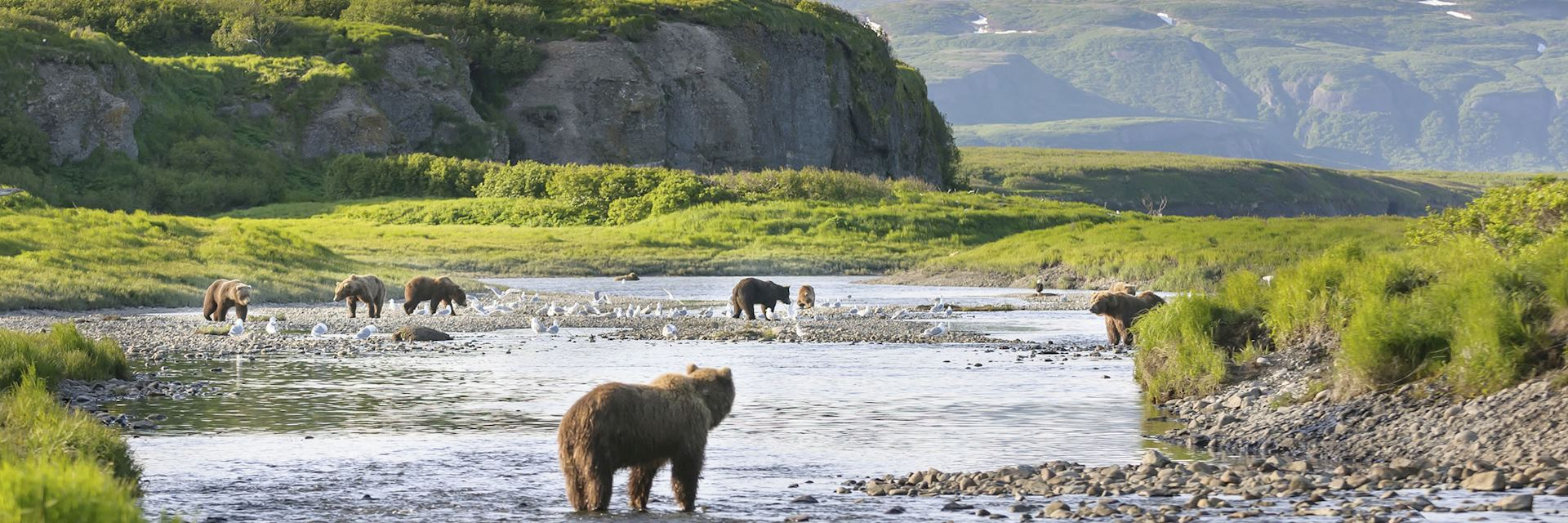 Brown bears on the Alaska Peninsula