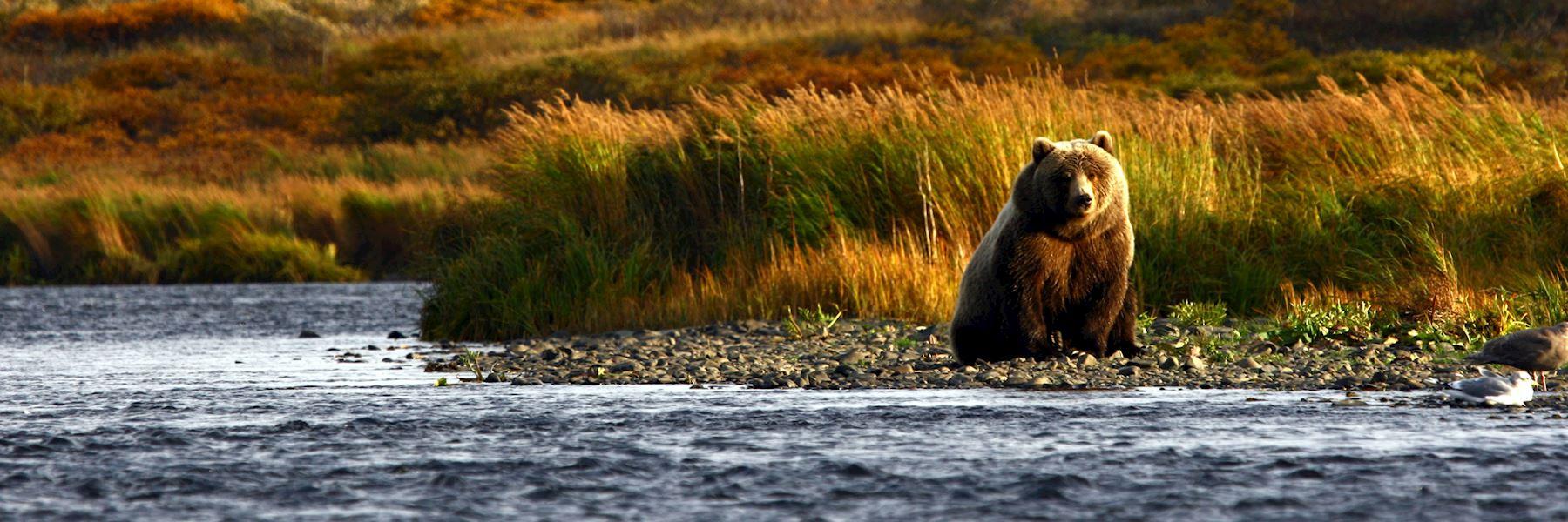 Visit Kodiak Island, Alaska