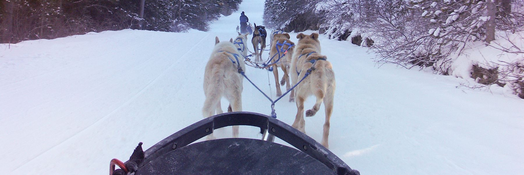 Dog-sledding and mushing experience with campfire lunch