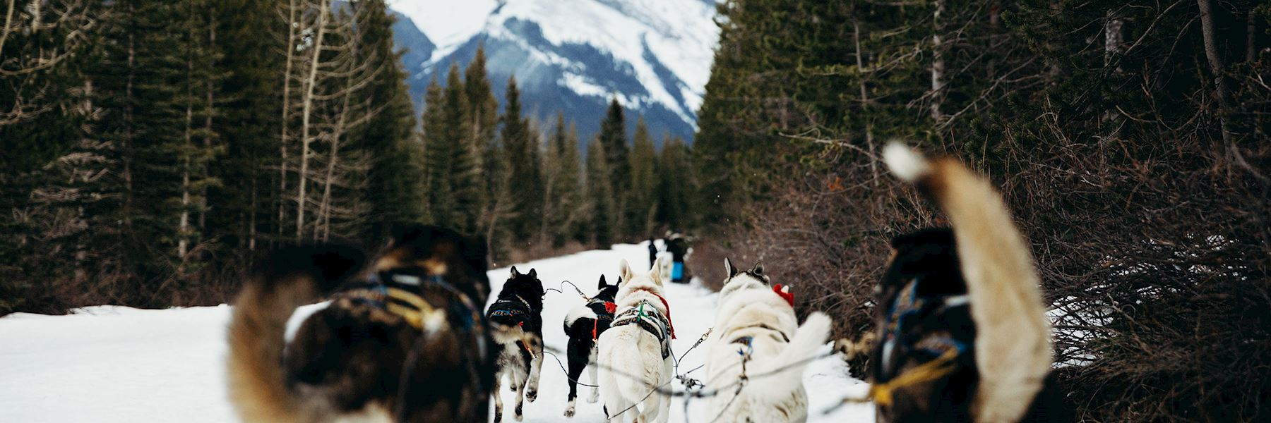 Dog-sledding tour in the Callaghan Valley