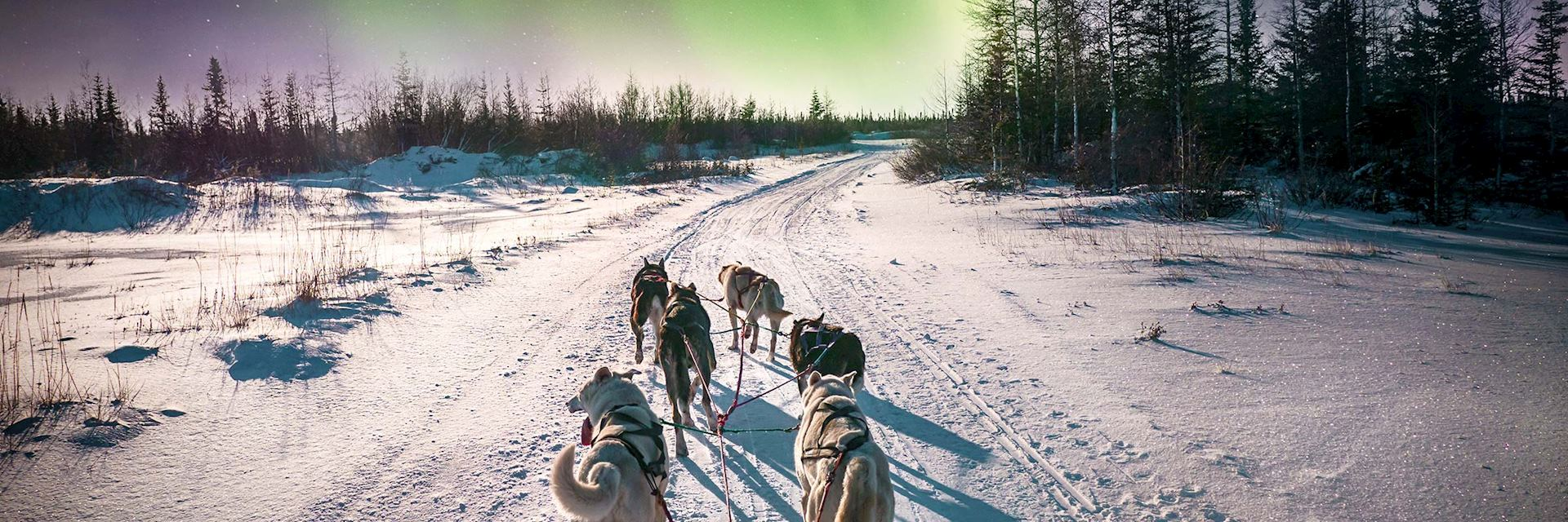 Dog sledding near Whitehorse