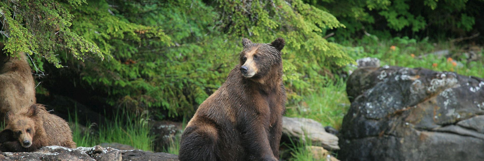 Grizzly bear, Prince Rupert