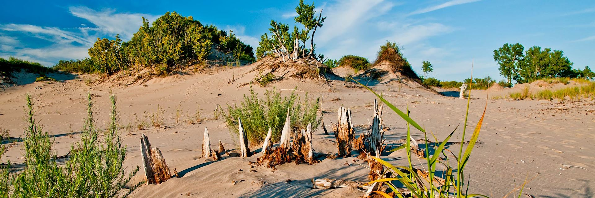 Sand dunes in Prince Edward County