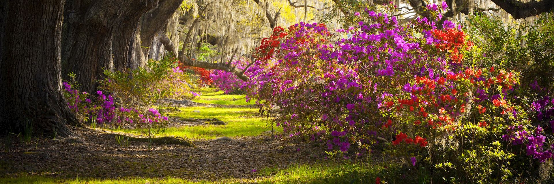 Springtime in Charleston