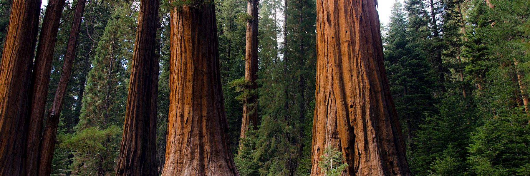 Visit Sequoia National Park, California