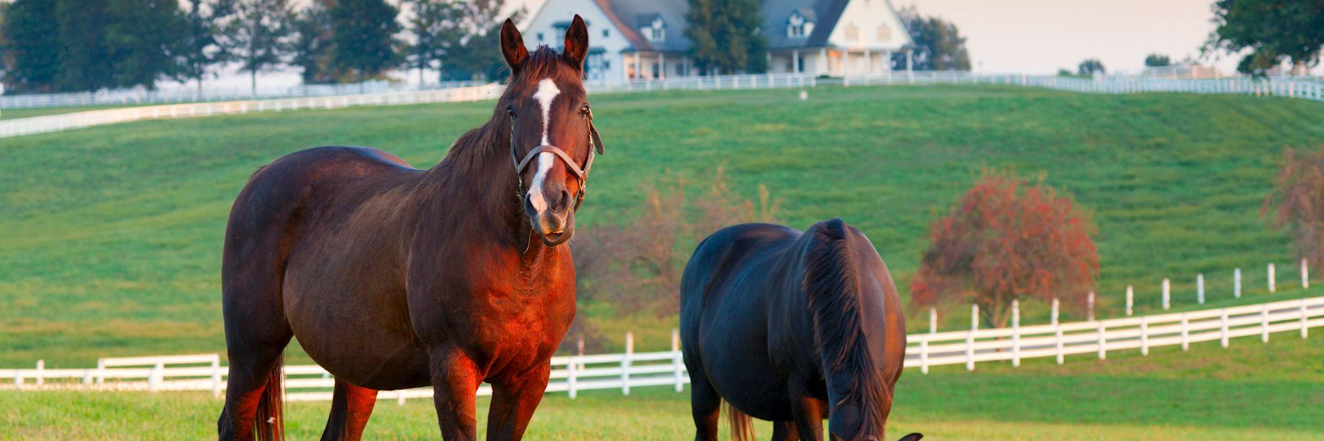 Horses in Lexington, Kentucky