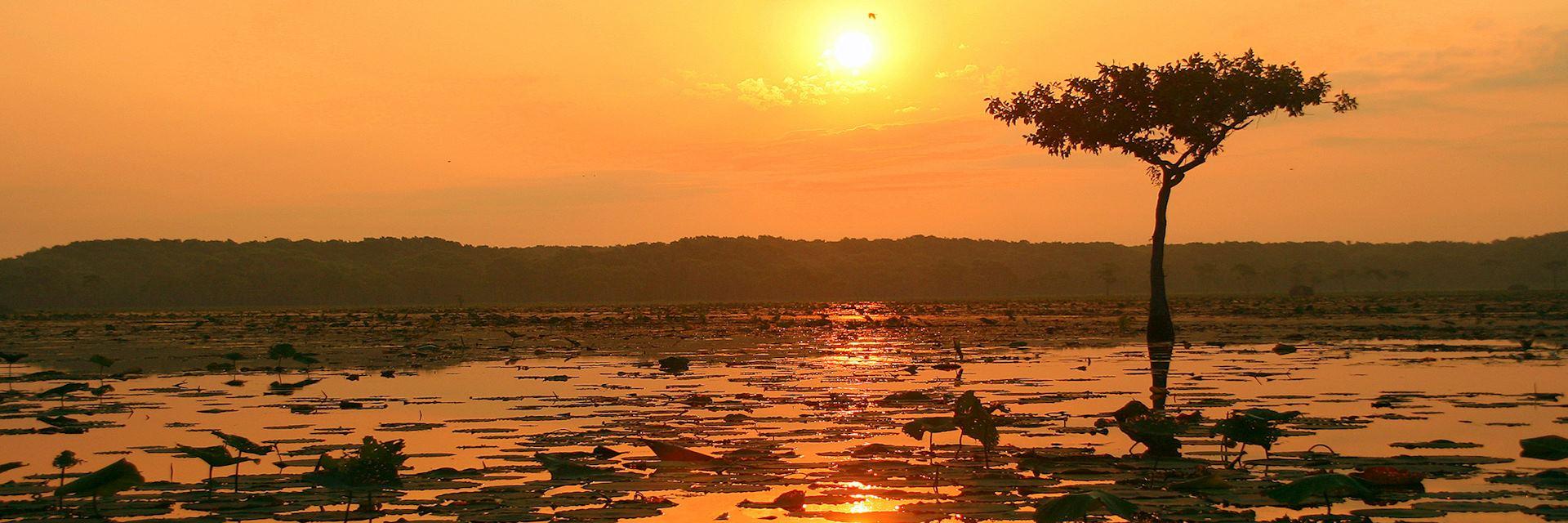 Lake Martin Nature Reserve, Lafayette, the USA