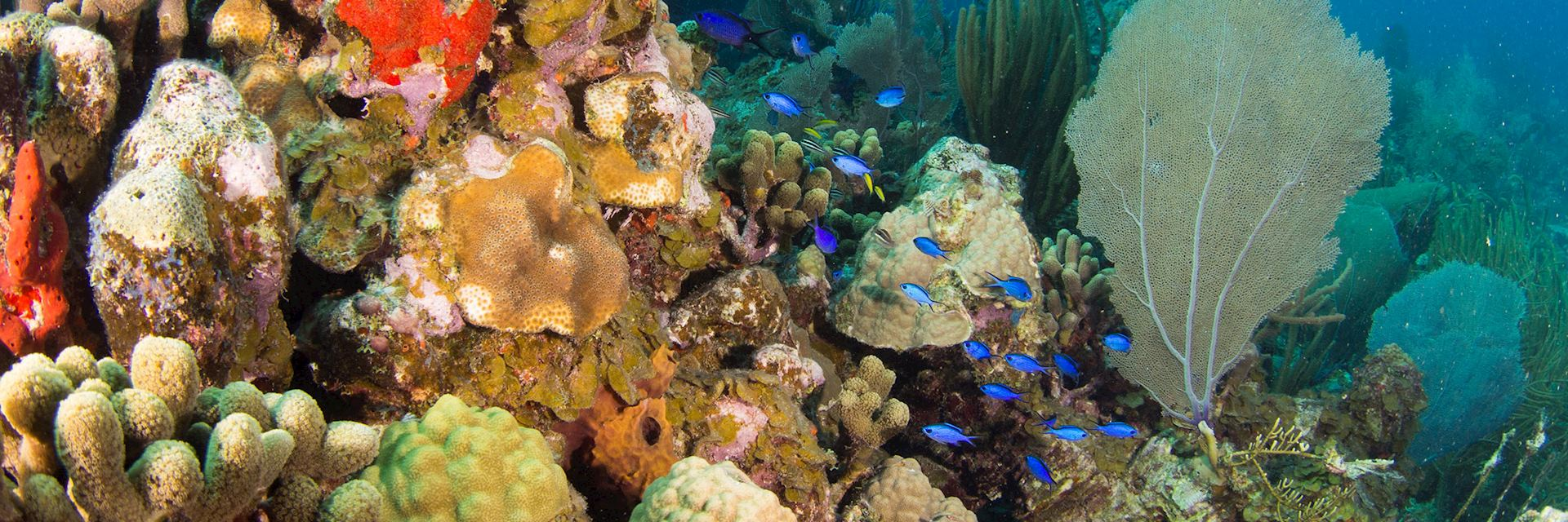 Coral reef in the British Virgin Islands