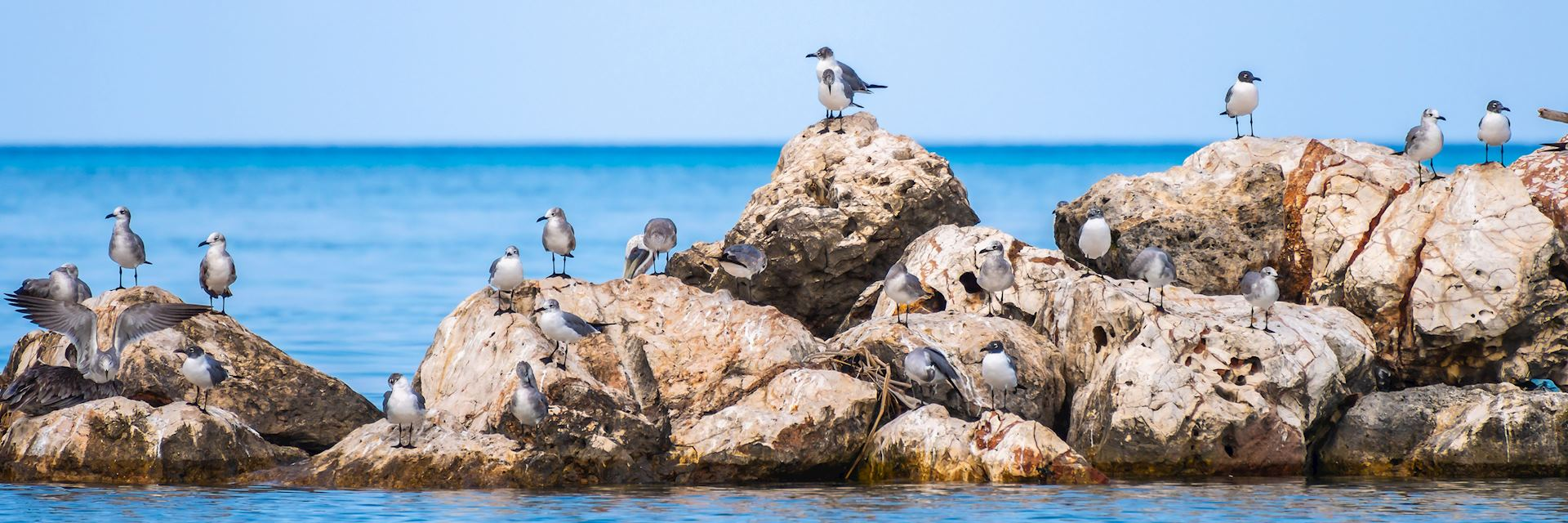 Birds on the rocks in Montego Bay, Jamaica