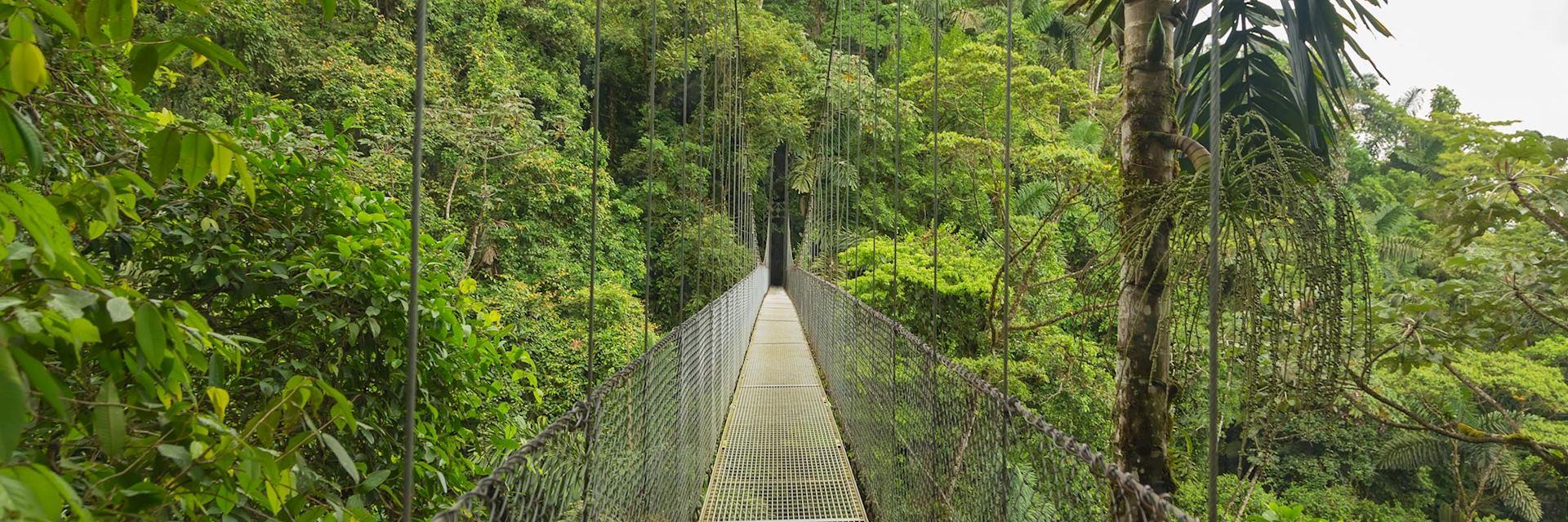 Cloud Forest bridge, Costa Rica