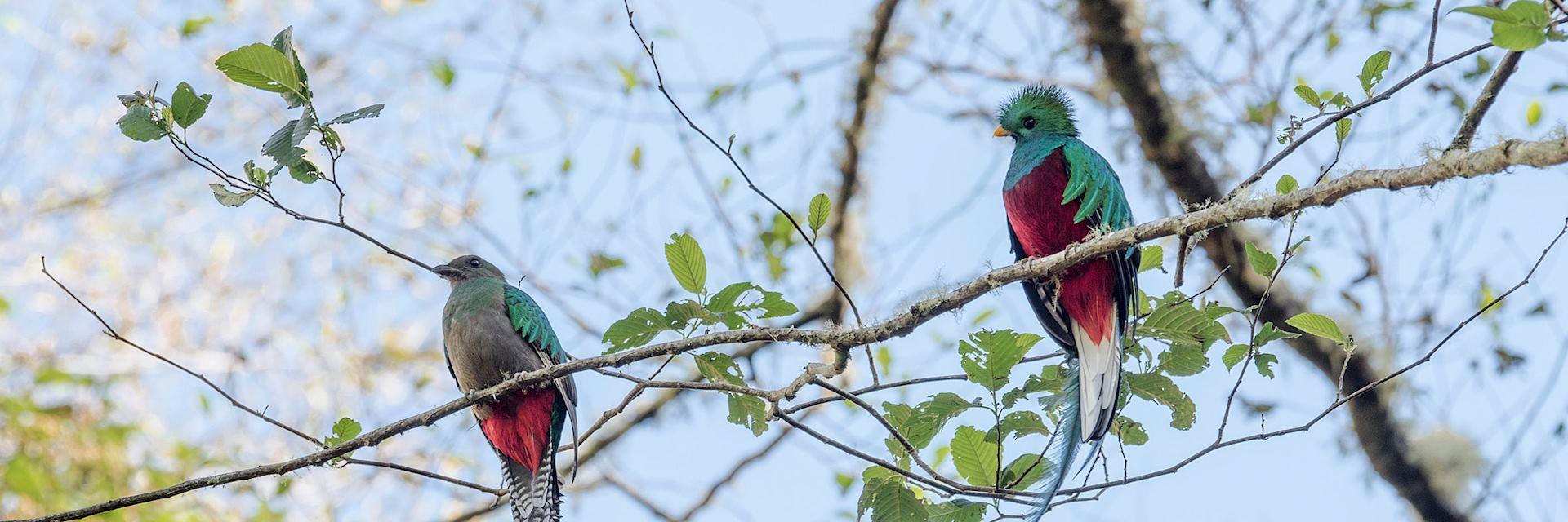 The elusive quetzal